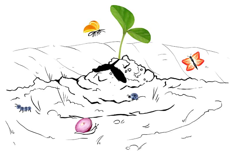 Sprouting from the dirt illustration